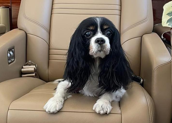 private jet dog luxury